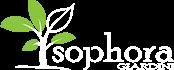 Sophora Giardini